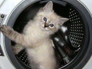 порвалась манжета стиральной машины