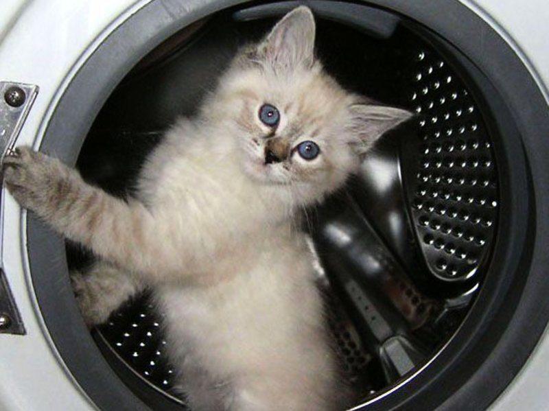 Порвалась манжета в стиральной машине - что делать?