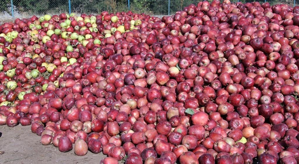 превращаем гору яблок в сок